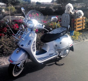 Vespa GTS Custom Dog