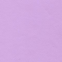 Lilac - Light Purple